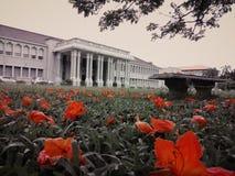 Το πανεπιστήμιο Beautyful μου στην εποχή λουλουδιών στοκ εικόνες