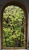 το παράθυρο δέντρων μου Στοκ Εικόνες