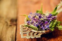 Το παραδοσιακό ρωσικό πράσινο βοτανικό τσάι από Fireweed φεύγει: Τσάι Koporye, ρωσικό τσάι ή Ivan Chai Στοκ εικόνα με δικαίωμα ελεύθερης χρήσης