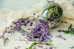 Το παραδοσιακό ρωσικό πράσινο βοτανικό τσάι από Fireweed φεύγει: Τσάι Koporye, ρωσικό τσάι ή Ivan Chai Στοκ φωτογραφία με δικαίωμα ελεύθερης χρήσης