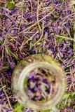 Το παραδοσιακό ρωσικό πράσινο βοτανικό τσάι από Fireweed φεύγει: Τσάι Koporye, ρωσικό τσάι ή Ivan Chai Στοκ εικόνες με δικαίωμα ελεύθερης χρήσης