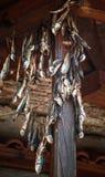 Το παστό ψάρι είναι αποξηραμένο στον αέρα Στοκ Εικόνες