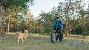 Το παχύ ποδήλατο κάλεσε επίσης fatbike ή ποδήλατο παχύς-ροδών στη θερινή οδήγηση στο δάσος στοκ εικόνες