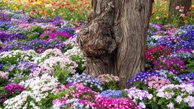 Το παλαιό δέντρο μεταξύ των ζωηρόχρωμων λουλουδιών Στοκ εικόνες με δικαίωμα ελεύθερης χρήσης