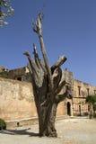 Το παλαιό δέντρο, μοναστήρι Arkadi, Κρήτη Στοκ Εικόνα