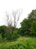 Το παλαιό δέντρο Στοκ εικόνα με δικαίωμα ελεύθερης χρήσης