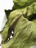 Το παλαιό φύλλο μπανανών που απομονώνεται στο άσπρο υπόβαθρο Στοκ εικόνες με δικαίωμα ελεύθερης χρήσης