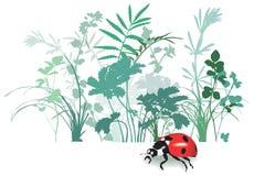 το πεδίο ανθίζει το φυτό χορταριών ελεύθερη απεικόνιση δικαιώματος