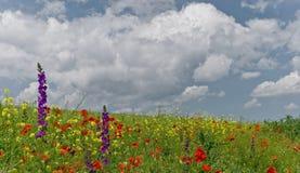 το πεδίο μπορεί wildflowers Στοκ εικόνα με δικαίωμα ελεύθερης χρήσης
