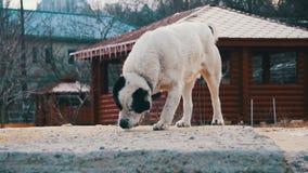 Το πεινασμένο μεγάλο σκυλί στην οδό το χειμώνα τρώει το ψωμί κίνηση αργή φιλμ μικρού μήκους