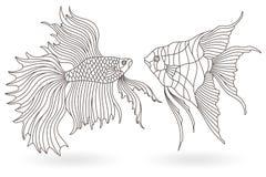 Το περίγραμμα έθεσε με τις απεικονίσεις των λεκιασμένων παραθύρων γυαλιού με τα ψάρια ενυδρείων, angelfish και Cockerel ψάρια, σκ απεικόνιση αποθεμάτων