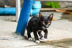 Το περιπλανώμενο γατάκι δραπετεύει τη σύλληψη πίσω από το θάμνο Στοκ Εικόνες