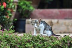 Το περιπλανώμενο γατάκι με τα χρυσά μάτια, είναι κάθεται προσεκτικά στη χλόη Στοκ Φωτογραφίες
