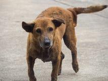 Το περιπλανώμενο σκυλί στοκ φωτογραφίες με δικαίωμα ελεύθερης χρήσης