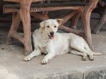 Το περιπλανώμενο σκυλί στοκ εικόνα με δικαίωμα ελεύθερης χρήσης