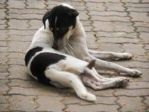 Το περιπλανώμενο σκυλί στοκ εικόνες