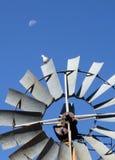Το περιστέρι και το φεγγάρι Στοκ φωτογραφίες με δικαίωμα ελεύθερης χρήσης