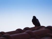 Το περιστέρι που στέκεται χαριτωμένα Στοκ φωτογραφία με δικαίωμα ελεύθερης χρήσης