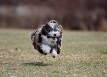 Το πετώντας σκυλί Στοκ φωτογραφίες με δικαίωμα ελεύθερης χρήσης