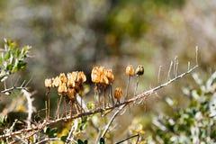 το πεδίο ανθίζει τη μακρο άνοιξη κίτρινη Στοκ εικόνες με δικαίωμα ελεύθερης χρήσης