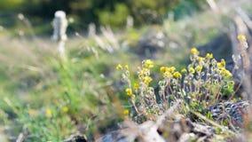 το πεδίο ανθίζει τη μακρο άνοιξη κίτρινη Στοκ Φωτογραφία