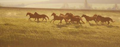 το πεδίο βόσκει το πράσινο καλοκαίρι αλόγων κοπαδιών Ο ήλιος αύξησης Στοκ Εικόνες