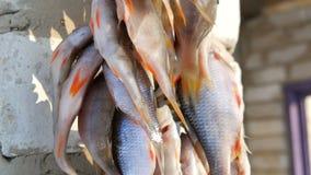 Το πιασμένο του γλυκού νερού ψάρι με τα κόκκινα πτερύγια κρεμά και ξεραίνει στο σχοινί έξω φιλμ μικρού μήκους
