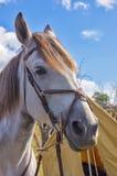 Το πιστό άλογο προσκαλεί το ταξίδι στοκ φωτογραφίες