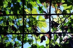 Το πλέγμα της ξύλινης δομής για τον κισσό ή το αναρριχητικό φυτό φυτεύει, βλέπει επάνω στοκ φωτογραφία με δικαίωμα ελεύθερης χρήσης