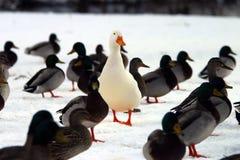 το πλήθος σας ξεχωρίζει Στοκ Φωτογραφίες