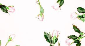 Το πλαίσιο από τα τριαντάφυλλα, επίπεδα βάζει στοκ εικόνες
