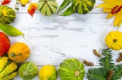 Το πλαίσιο από τις ζωηρόχρωμες διακοσμητικές κολοκύθες, ξεραίνει τα φύλλα και τα μούρα, σε έναν ξύλινο πίνακα Το επίπεδο προτύπων Στοκ φωτογραφία με δικαίωμα ελεύθερης χρήσης