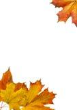το πλαίσιο βγάζει φύλλα τ& Στοκ Φωτογραφία