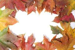 Το πλαίσιο συνόρων του ζωηρόχρωμου φθινοπώρου βγάζει φύλλα - απομονωμένος στο λευκό Στοκ Φωτογραφία
