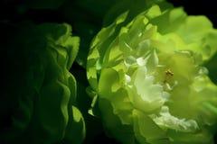 Το πλαστό λουλούδι εγκαθιστά στο σπίτι στοκ εικόνες