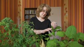 Το πορτρέτο ενός βιολόγου γυναικών αυτό είναι κατ' οίκον να αυξηθεί τις νέες ποικιλίες των λαχανικών απόθεμα βίντεο