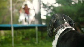 Το πορτρέτο ενός λαγωνικού το σκυλί μοιάζει με ένα παιχνίδι κοριτσιών Υπαίθρια στο πάρκο κλείστε επάνω φιλμ μικρού μήκους