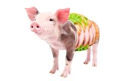 Το πορτρέτο ενός χοίρου γίνεται στο σάντουιτς με το λουκάνικο Στοκ φωτογραφία με δικαίωμα ελεύθερης χρήσης