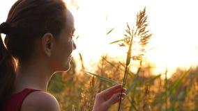 Το πορτρέτο της γυναίκας κοιτάζει γλυκά και αγγίζει την ψηλή χλόη στο ηλιοβασίλεμα φιλμ μικρού μήκους