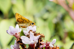 Το πορτρέτο των ζωντανών πεταλούδων είναι στον κήπο Στοκ εικόνες με δικαίωμα ελεύθερης χρήσης