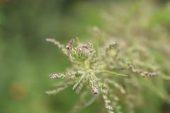 Το πορφυρό λουλούδι στοκ εικόνα