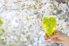Το ποτό του ακτινίδιου παραδίδει το γυαλί Στοκ Εικόνες
