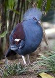 το πουλί έστεψε τη Γουιν στοκ εικόνες