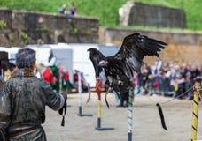Το πουλί εμφανίζει Στοκ Εικόνες