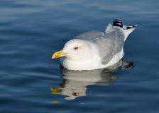 Το πουλί θάλασσας στοκ εικόνες
