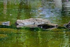 Το πουλί λούζεται στο νερό Στοκ Εικόνες