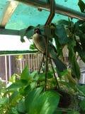 Το πουλί μητέρων καταπίνει στοκ εικόνα