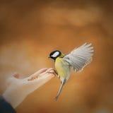 Το πουλί πέταξε για να φάει στοκ φωτογραφία με δικαίωμα ελεύθερης χρήσης