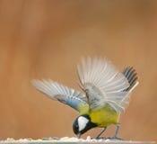 Το πουλί πέταξε για να φάει στοκ φωτογραφία