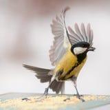 Το πουλί πέταξε για να φάει στοκ εικόνες